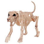 beagle bones fake dog skeleton